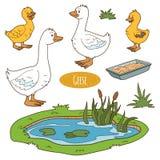 Reeks leuke landbouwbedrijfdieren en voorwerpen, vectorgansfamilie Royalty-vrije Stock Fotografie