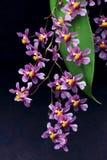 Reeks lilac orchideebloemen Stock Foto's