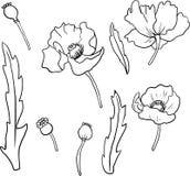Reeks lineaire bloemen van de tekeningspapaver Stock Foto's