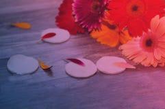 Reeks make-upborstels op achtergrond Het make-upschoonheidsmiddel, de schoonheidsmixer, de siliconespons en de mooie lente bloeie royalty-vrije stock afbeelding