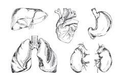 Reeks menselijke organen, vectorillustratie Royalty-vrije Stock Foto