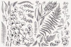 Reeks met bladeren en varens stock illustratie