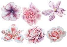 Reeks met bloemen Nam toe Alstroemeria pansies Pioen Clematissen De illustratie van de waterverf royalty-vrije stock foto's