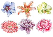Reeks met bloemen Nam toe Orchidee Lelie Pioen Gerbera De illustratie van de waterverf Stock Foto