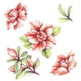 Reeks met bloemenazalea's De hand trekt waterverfillustratie Royalty-vrije Stock Afbeeldingen