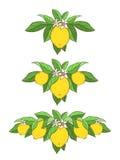 Reeks met citroenen Royalty-vrije Stock Foto's