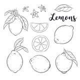 Reeks met citroenen Stock Afbeelding