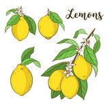 Reeks met citroenen Royalty-vrije Stock Foto