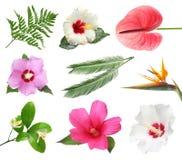 Reeks met mooie tropische bloemen en groene bladeren stock foto's