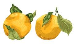 Reeks met 2 oranje die vruchten in grafisch ontwerp met bladeren worden getrokken royalty-vrije illustratie