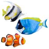 Reeks met waterverf tropische vissen royalty-vrije illustratie