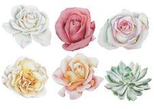 Reeks met waterverfbloemen Nam toe succulents royalty-vrije stock fotografie