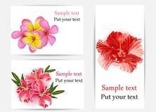 Reeks mooie giftkaarten met hibiscus, plumeri Royalty-vrije Stock Foto