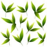 Reeks mooie groene bladeren Stock Afbeeldingen
