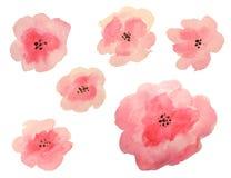 Reeks mooie waterverfbloemen op witte achtergrond Royalty-vrije Stock Afbeelding