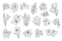 Reeks mooie zwart-wit bloemen De lelie, tulp, pioen, nam, gele narcis, calendula, viooltje, petunia toe Schetsmatige pictogrammen stock illustratie