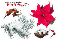Reeks natuurlijke die de winter en Kerstmisinstallaties op wit worden geïsoleerd Stock Afbeeldingen