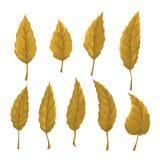 Reeks oranje bladeren op een witte achtergrond Royalty-vrije Stock Foto's