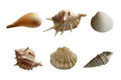 Reeks overzeese shells Stock Foto