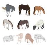 Reeks paard en schapen op witte achtergrond wordt geïsoleerd die stock foto's