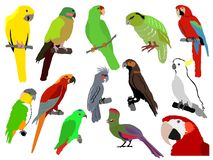 Reeks papegaaien Stock Foto
