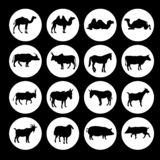 Reeks pictogrammen van landbouwbedrijfdieren royalty-vrije illustratie