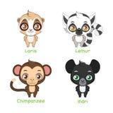 Reeks primaatillustraties stock illustratie