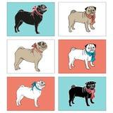 Reeks pugs Vector illustratie EPS, JPG Royalty-vrije Stock Fotografie