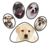 Reeks puppy, poot royalty-vrije stock foto's