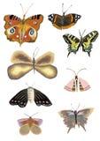 Reeks realistische kleurrijke vlinders, de illustratie van de vlinderwaterverf stock illustratie