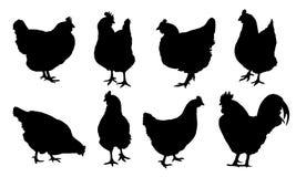 Reeks realistische vectorsilhouetten van geïsoleerde kippen, kippen en haan royalty-vrije illustratie
