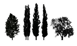 Reeks realistische vectorsilhouetten van loofbomen vector illustratie
