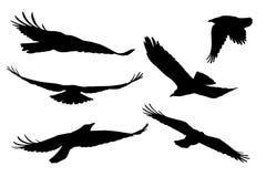 Reeks realistische vectorsilhouetten van vliegende vogels royalty-vrije illustratie