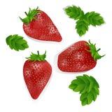 Reeks realistische zoete en verse die aardbeien op witte achtergrond worden geïsoleerd Vers organisch fruit, illustratie van rood royalty-vrije illustratie