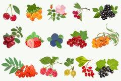 Reeks rijpe bessen met bladeren op witte achtergrond Vector stock illustratie
