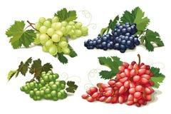 Reeks rijpe druiven stock illustratie