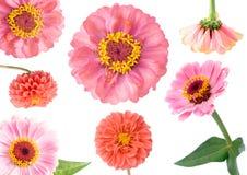 Reeks rode bloemen Royalty-vrije Stock Foto's