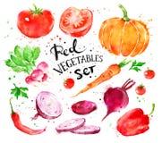 Reeks rode groenten vector illustratie