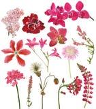 Reeks rode kleurenbloemen op wit Stock Foto's