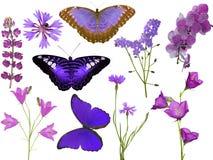 Reeks roze die vlinders en bloemen op wit worden geïsoleerd Stock Foto's
