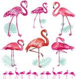 Reeks roze flamingoes Stock Foto's