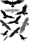Reeks silhouetten van vliegende adelaars Royalty-vrije Stock Foto