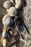 Reeks slakken op een tak wordt gegroepeerd die stock foto