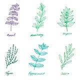 Reeks sommige kruiden van de Provence: basilicum, rozemarijn, orego, thyme, fut Stock Afbeeldingen