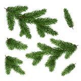 Reeks spartakken Groene die Kerstboomtakken worden geïsoleerd met royalty-vrije stock afbeeldingen