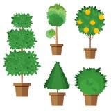Reeks straatbomen en struiken in potten Vector, illustratie in vlakke die stijl op witte achtergrond EPS10 wordt geïsoleerd Royalty-vrije Stock Foto
