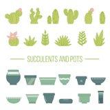 Reeks succulente installaties, cactussen en potten Royalty-vrije Stock Foto