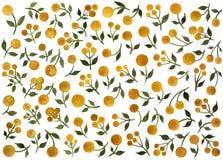 Reeks takjes van mimosa op een witte achtergrond De illustratie van de waterverf Stock Afbeeldingen