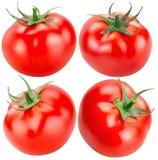 Reeks tomaten op een witte achtergrond wordt geïsoleerd die Stock Foto's