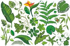 Reeks tropische bladeren royalty-vrije illustratie